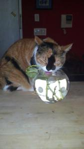 venus_the_cat